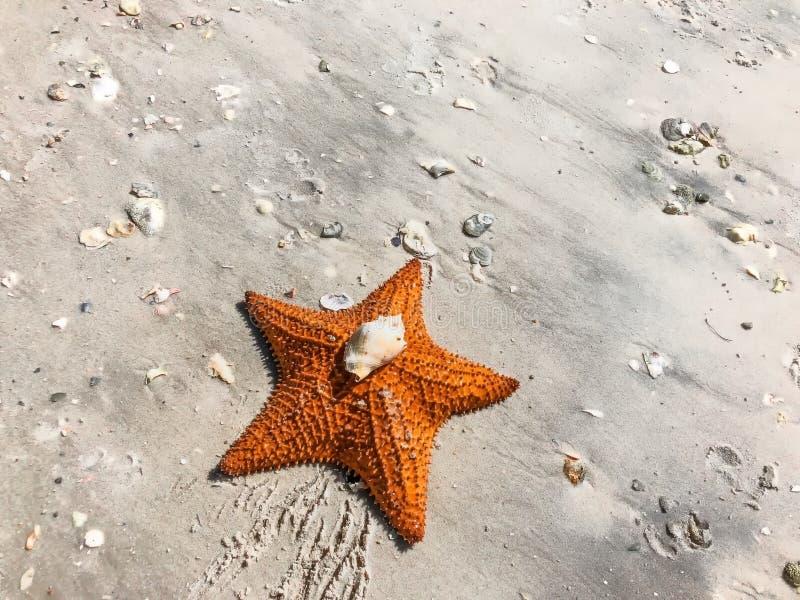 grande estrela de mar alaranjada na areia imagens de stock royalty free