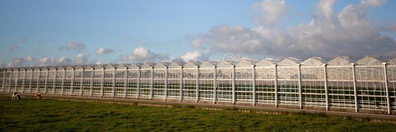 Grande estufa de vidro moderna foto de stock
