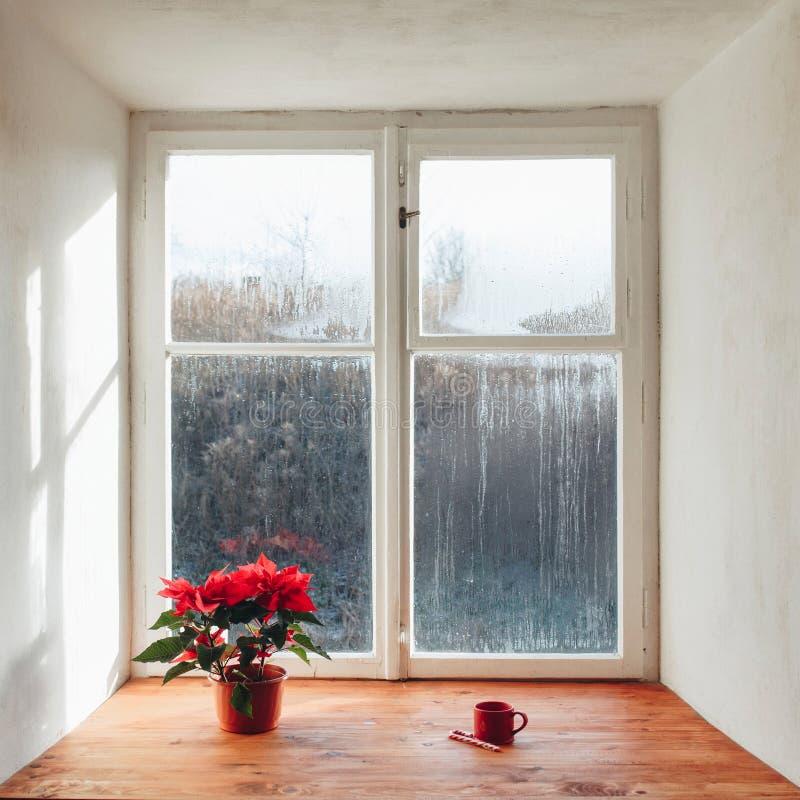Grande fenêtre congelée à l'intérieur avec la fleur et la tasse sur le rebord de fenêtre photo stock