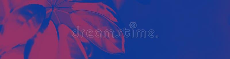 Grande feuille fraîche sur le fond bleu violet pourpre de duotone Couleurs au n?on ? la mode toned Style minimaliste photographie stock