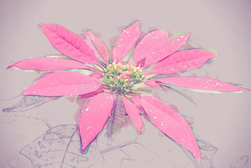 Grande fiore rosso della stella di Natale fotografie stock libere da diritti