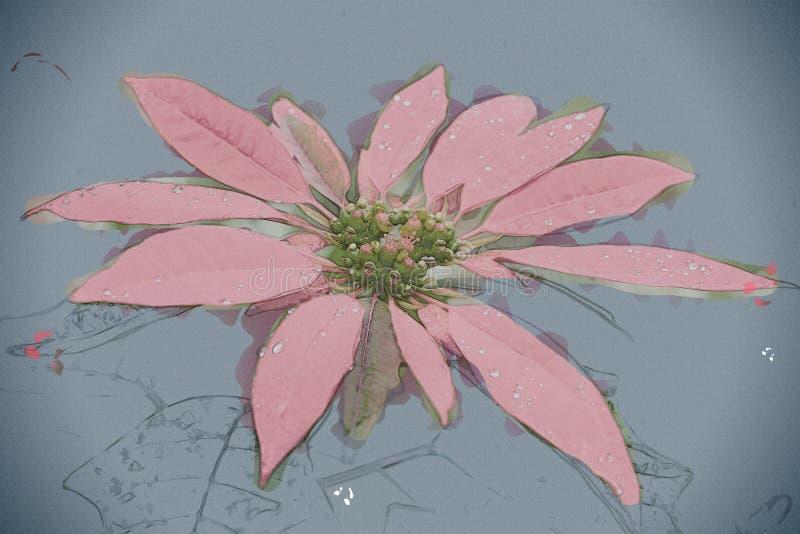 Grande fiore rosso della stella di Natale fotografia stock libera da diritti