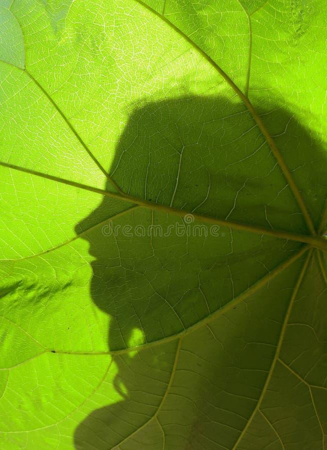 Grande foglia e profilo fotografie stock
