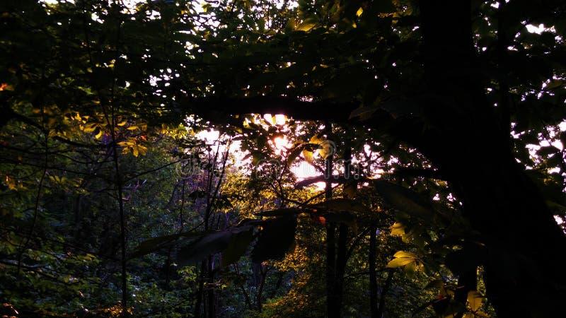 Grande forêt photo stock