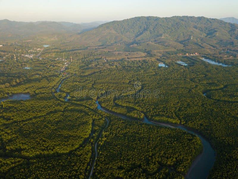 Grande forêt de palétuvier à la province de Phang Nga photos stock