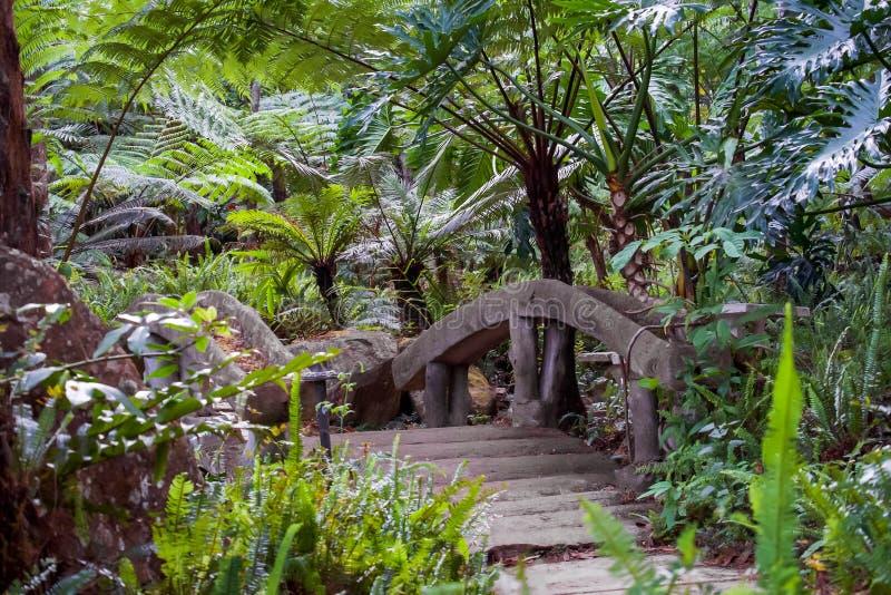 Grande fougère d'arbre sur la forêt tropicale à la cascade de Siriphum avec le pont en pierre et le passage couvert en pierre au  photo stock