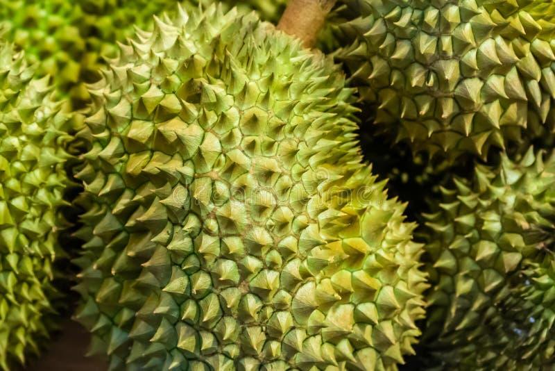 Grande frutta coperta di spine verde che odora forte puzzolente, la frutta reale della Tailandia Primo piano esotico della frutta fotografie stock libere da diritti