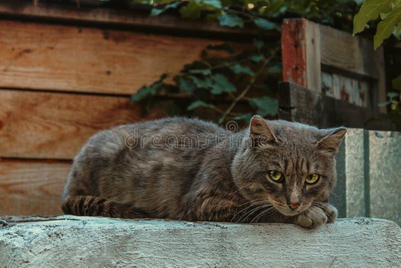 Grande gatto fotografia stock