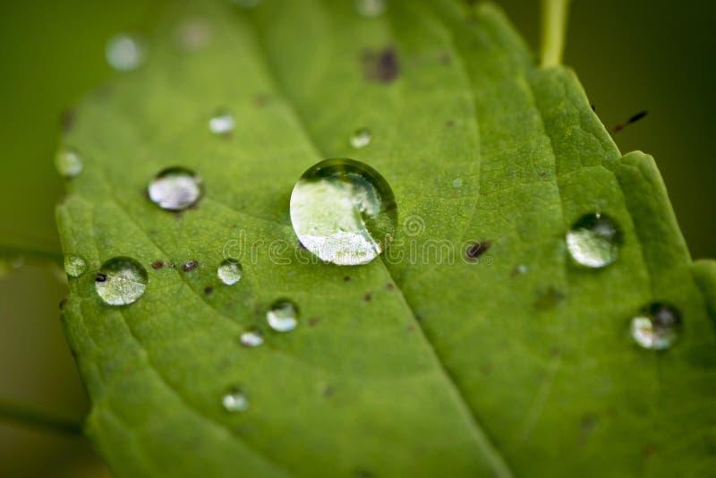 Grande goutte de l'eau au milieu de petit sur une feuille verte photos stock