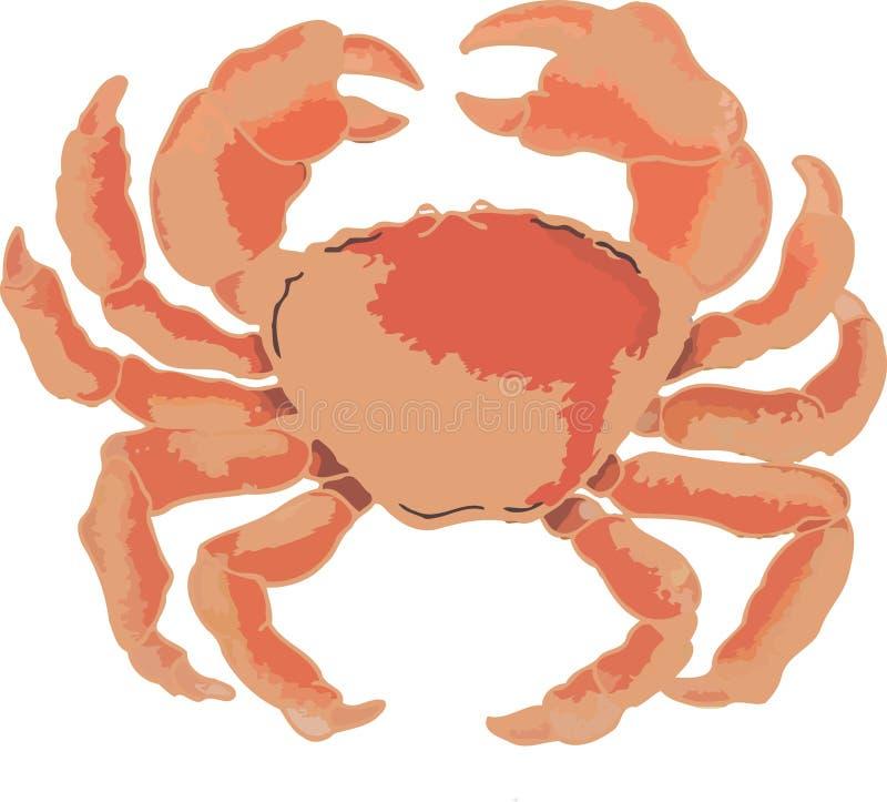 Grande granchio dei crostacei rosso dell'Atlantico illustrazione di stock