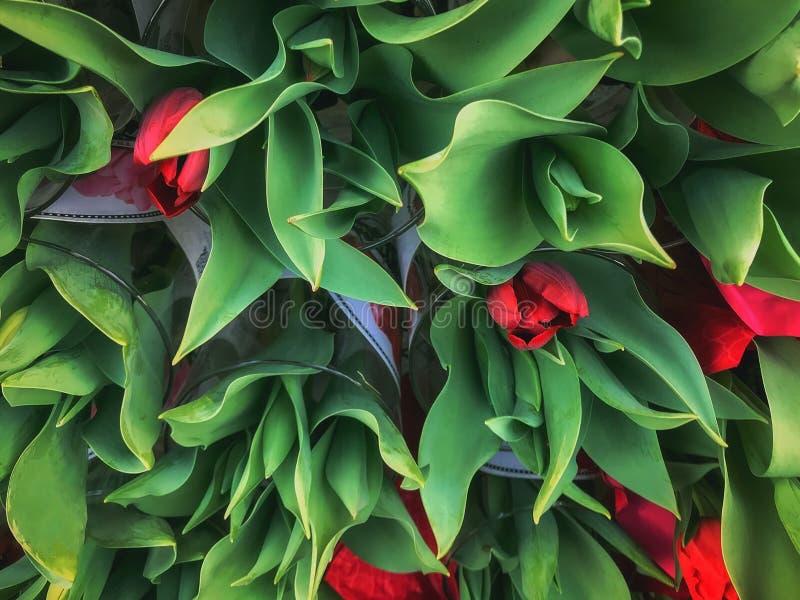 Grande grupo de Tulip Bouquets vermelha bonita na exposição fotos de stock royalty free