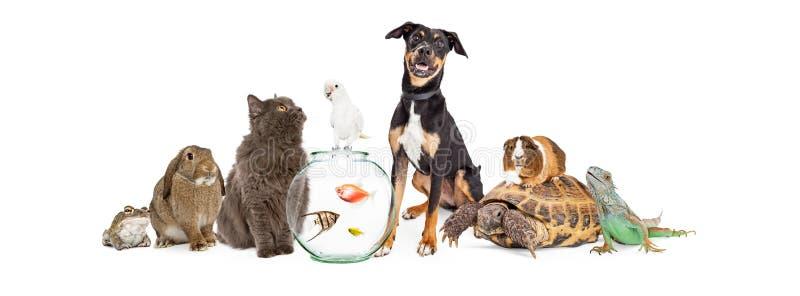 Grande gruppo di animali da compagnia insieme fotografia stock libera da diritti