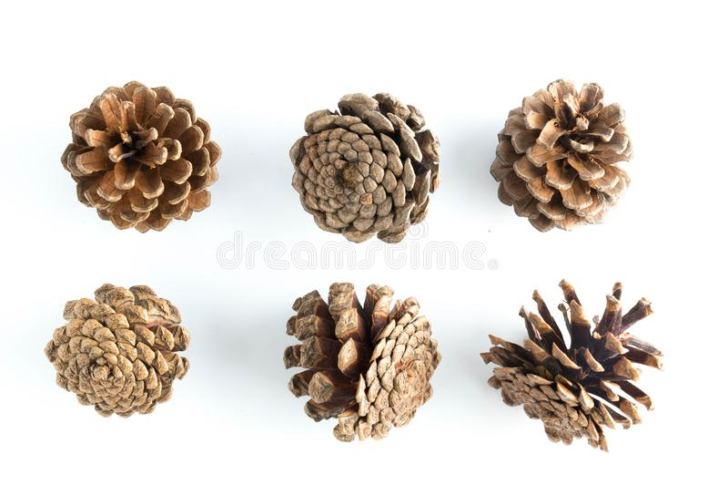 Grande insieme di varie conifere dei coni isolate immagini stock libere da diritti