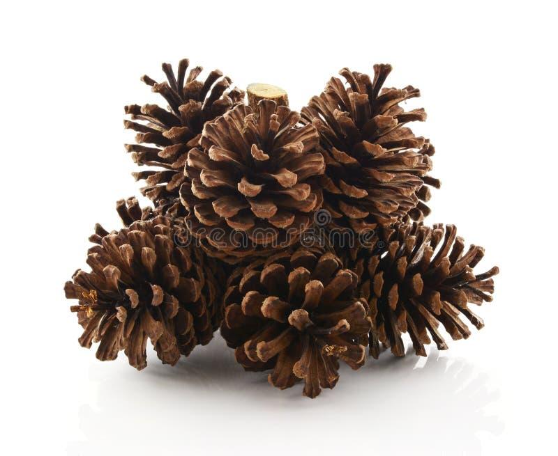 Grande insieme di varie conifere dei coni isolate su bianco fotografia stock