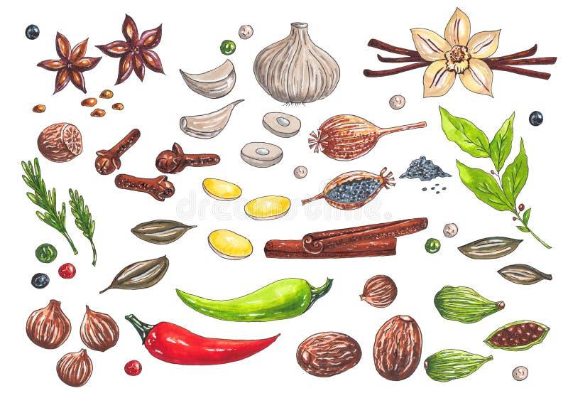 Grande insieme disegnato a mano con i tipi differenti degli indicatori dell'acquerello di spezie illustrazione di stock
