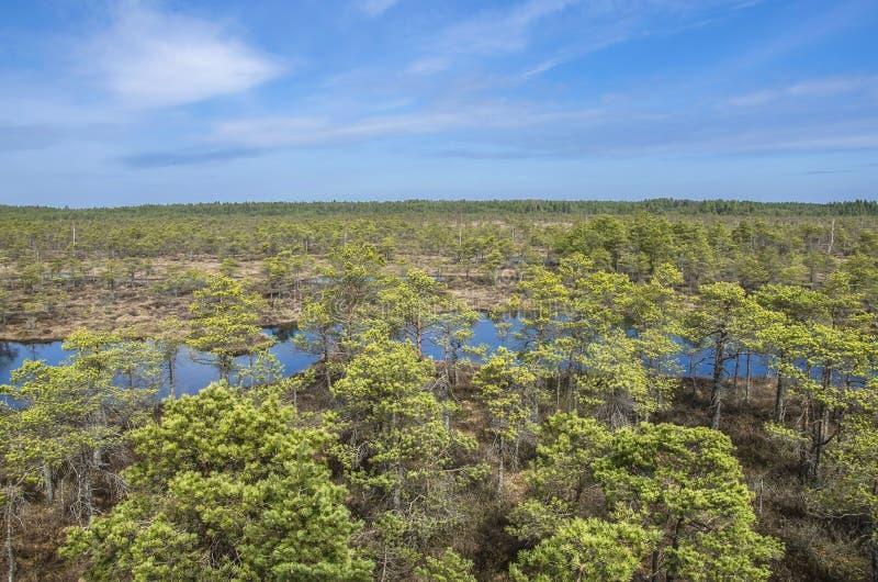 Grande Kemeri Bog Boardwalk na Letónia imagem de stock royalty free