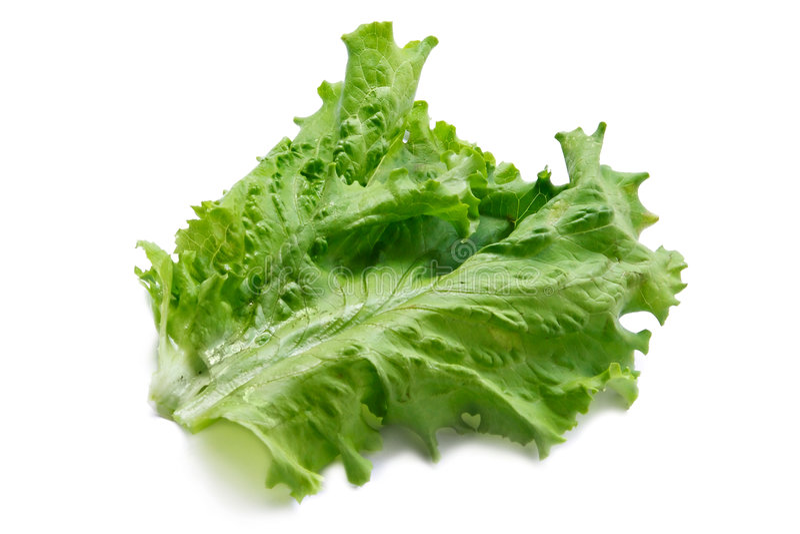 Grande lame fraîche verte de salade images libres de droits