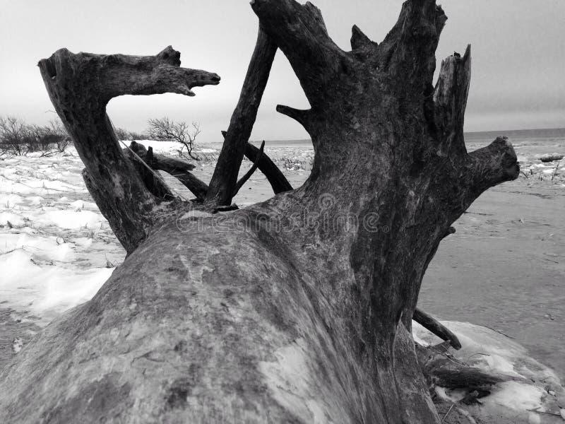 Grande legname galleggiante immagine stock