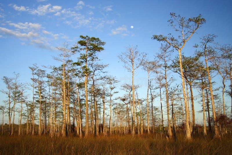 Grande lever de la lune de Cypress photos libres de droits