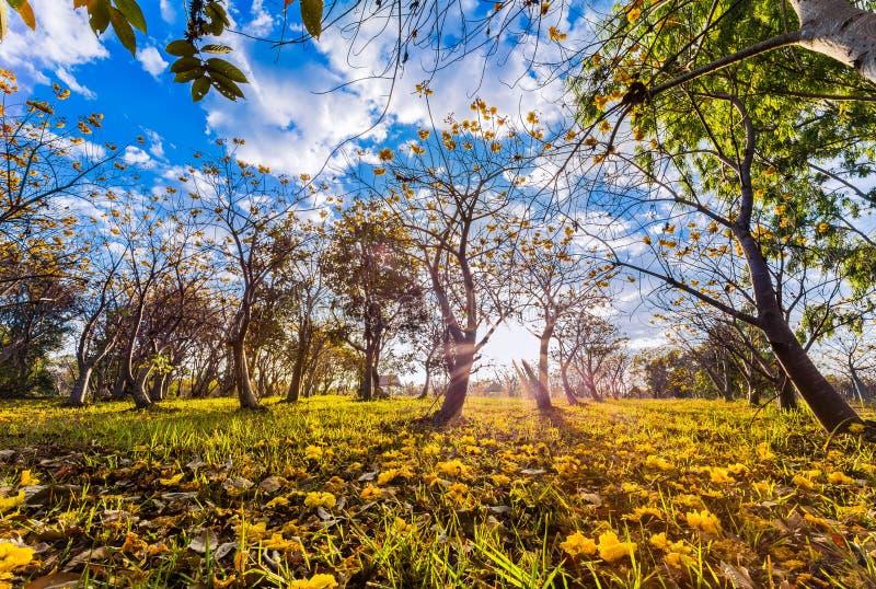 Grande luce, grande posto, bello giardino fotografia stock libera da diritti