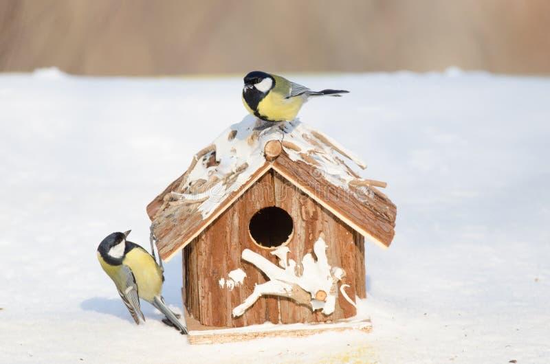 Grande mésange sur une maison de alimentation dans un jour d'hiver neigeux images stock