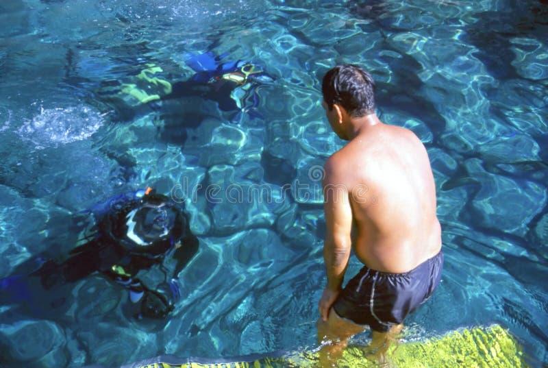 Grande mergulho!! fotos de stock royalty free