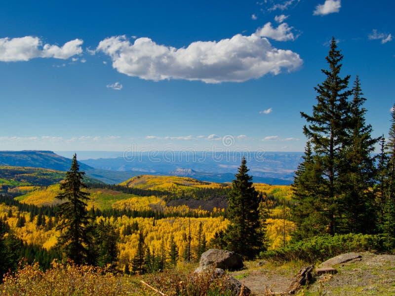 Grande Mesa Aspen immagine stock libera da diritti