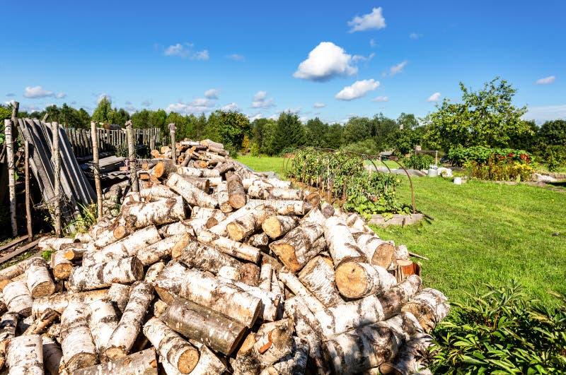Grande mucchio della legna da ardere asciutta della betulla, alberi abbattuti alla foresta fotografia stock