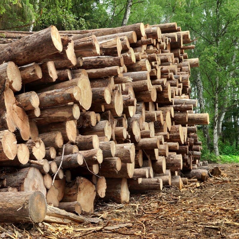 Grande mucchio di legno nella foresta di estate fotografia stock