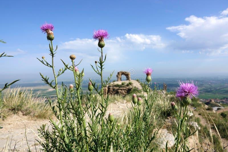 Grande muraglia e fiori selvaggi fotografia stock libera da diritti