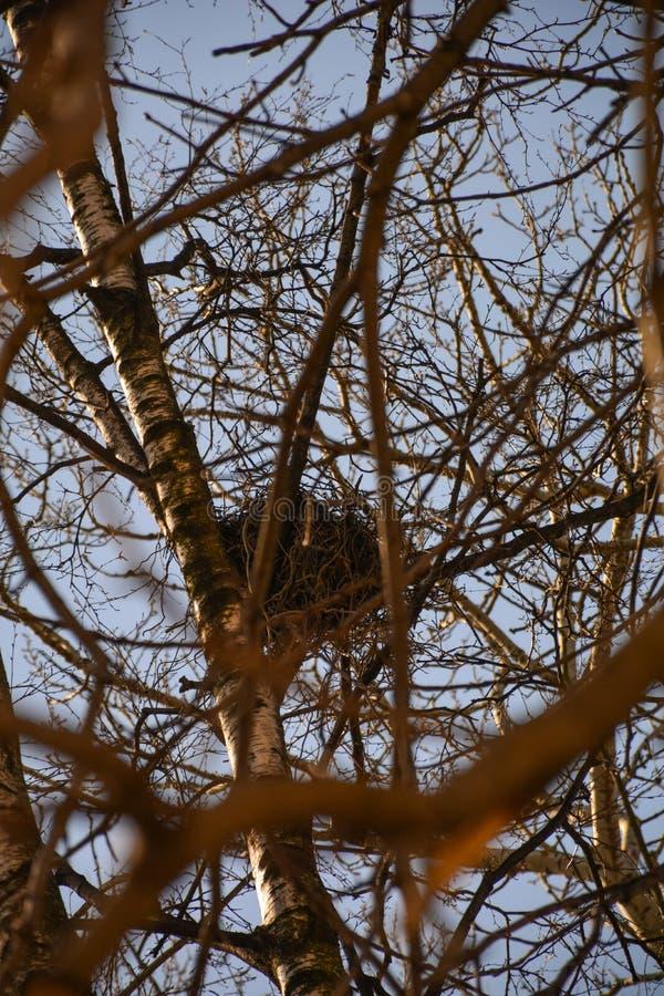 Grande nido sui rami di albero fotografia stock