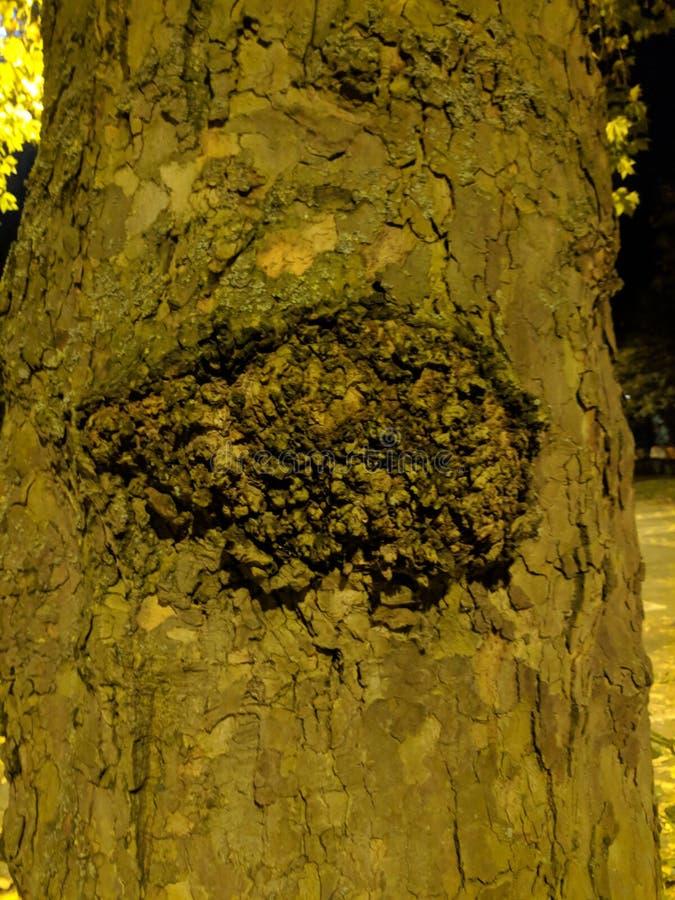 Grande nodo dell'albero immagine stock