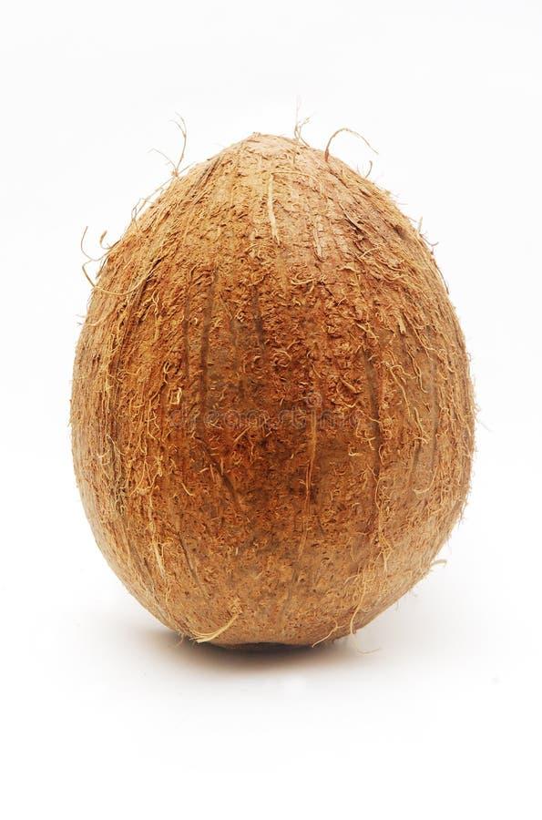 Grande noix de coco d'isolement image libre de droits