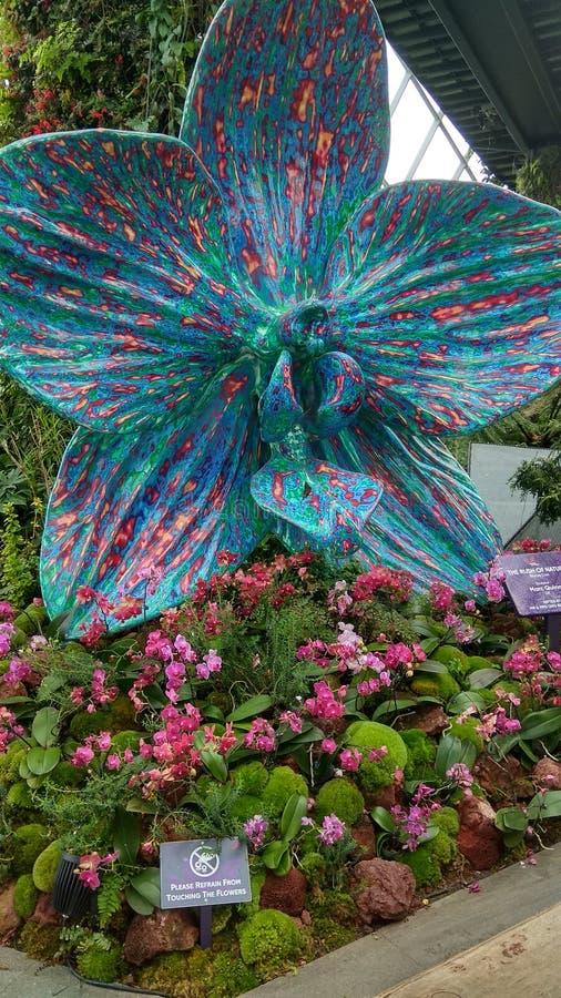 Grande orchidea di Singapore Orchidea Garden immagine stock libera da diritti