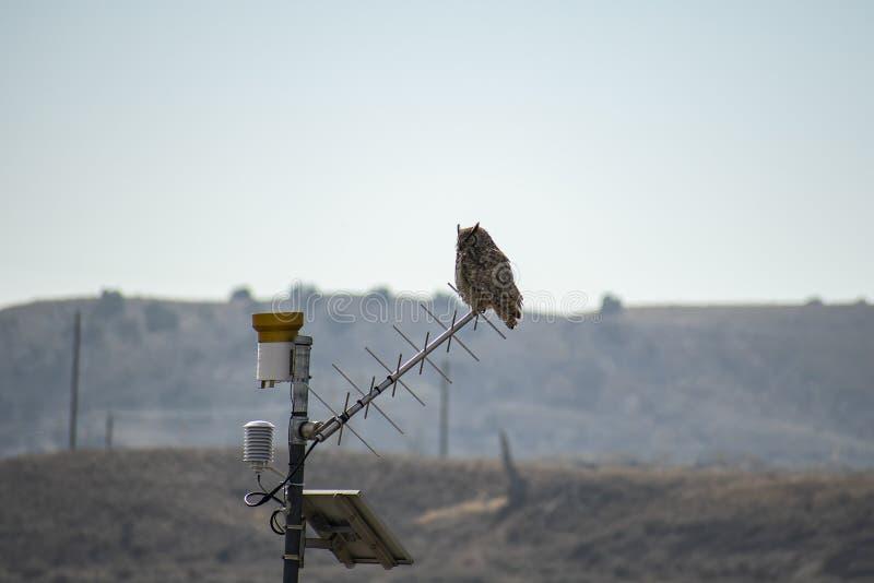Grande Owl Silhouetted Against Horned o Colorado Sun imagem de stock royalty free