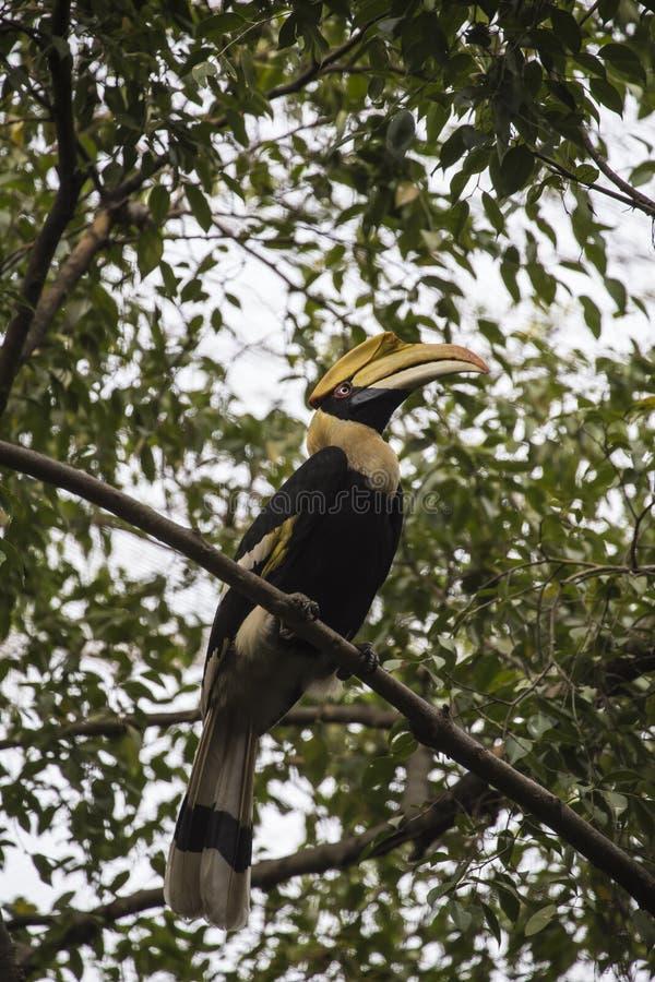 Download Grande Pássaro Da Conta Do Chifre Foto de Stock - Imagem de pássaro, brilhante: 29829474