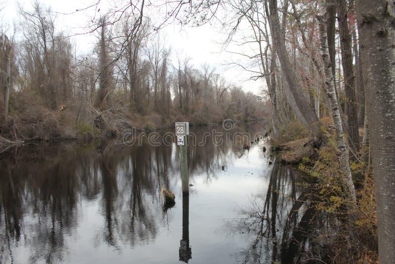 Grande pântano desânimo, North Carolina imagem de stock royalty free
