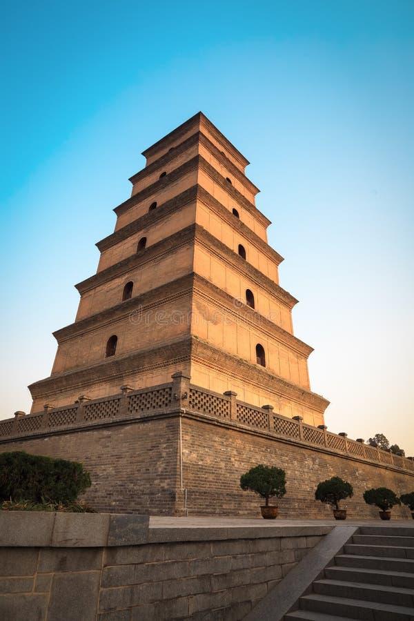 Grande pagoda sauvage d'oie au crépuscule image stock