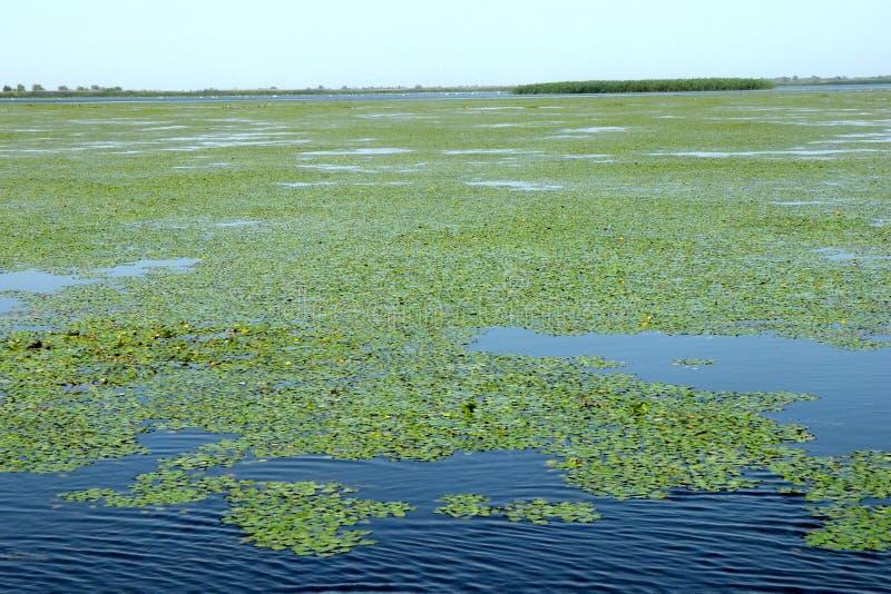 Grande paisagem no delta de Danúbio, Tulcea, Romênia imagem de stock