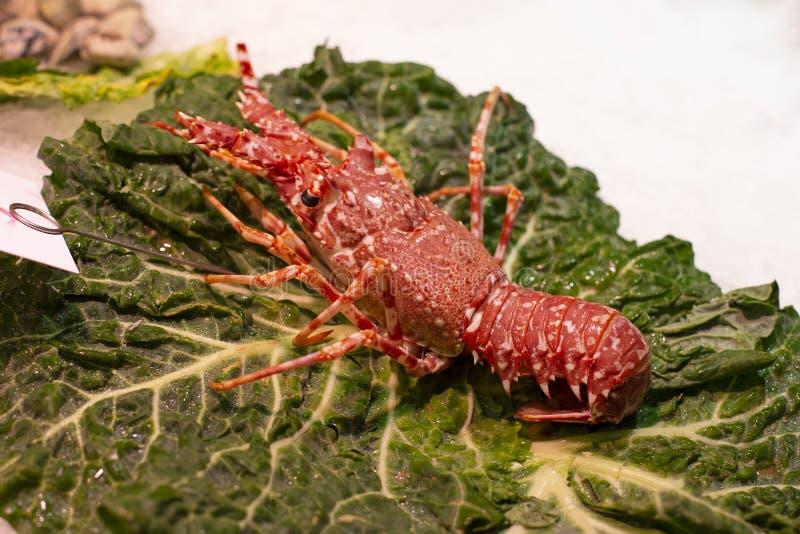 Grande palinuro naturale fresco rosso che anche conosciuto come le aragoste o il gambero sul ghiaccio immagine stock