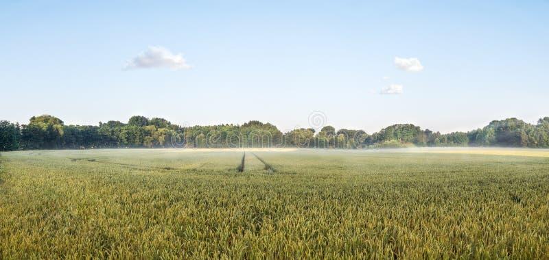 Grande panorama di un sole del grainfield di mattina con nebbia Bayreuth, Germania fotografia stock libera da diritti