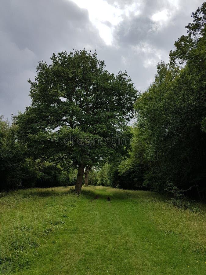 Grande percorso dell'albero a piedi immagine stock