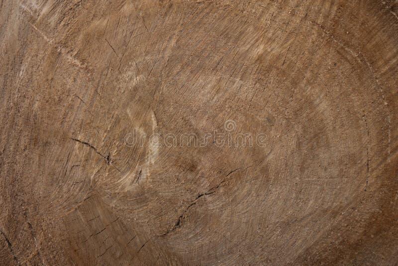 Grande pezzo circolare di sezione trasversale di legno con il modello e le crepe di struttura dell'anello di albero Sezione trasv immagini stock