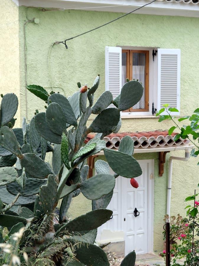 Grande pianta decorativa del fico d'India fuori di Pale Green House, Grecia fotografia stock libera da diritti