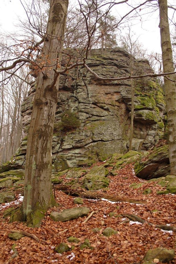 Grande pietra in foresta dagli alberi fotografia stock