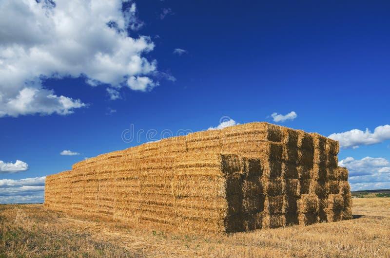 Grande pila di pile rettangolari del fieno nel campo vuoto su un fondo di cielo blu con le belle nuvole fotografie stock