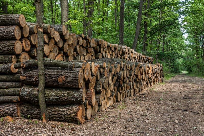 Grande pile de bois dans la forêt photographie stock libre de droits