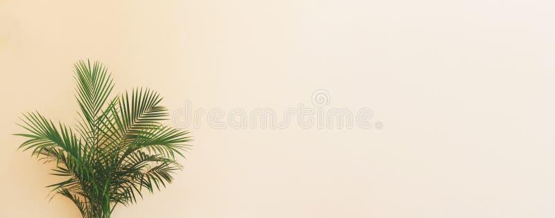 Grande planta interna da palma em uma sala amarela fotos de stock royalty free