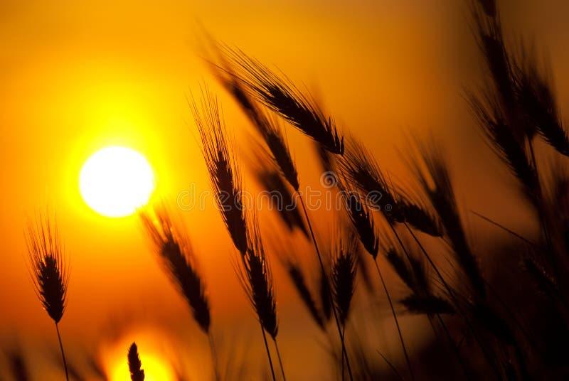 Grande por do sol do verão fotos de stock
