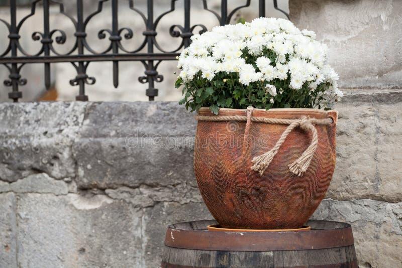 Grande potenciômetro de flor com crisântemos brancos Venda das flores imagem de stock
